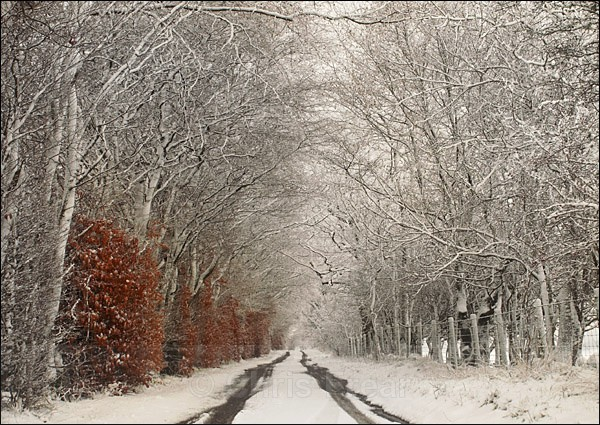 Morton Lane in Snow - Traditional Landscapes