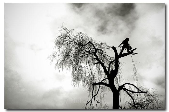 De-forestation - Scapes