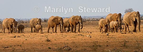 Elephants on the move - Exhibition acceptances
