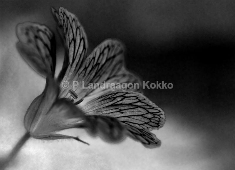 Flower Wings - Black & White