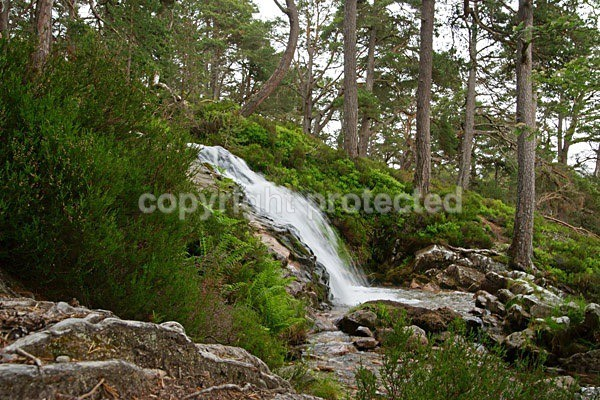 Waterfall in Rothiemurchus Forest - Scotland