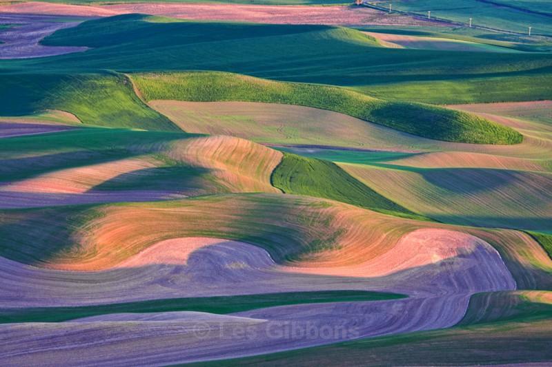fields 13 - Palouse