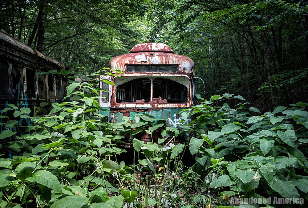 Trolley Graveyard | About to Pounce - The Trolley Graveyard