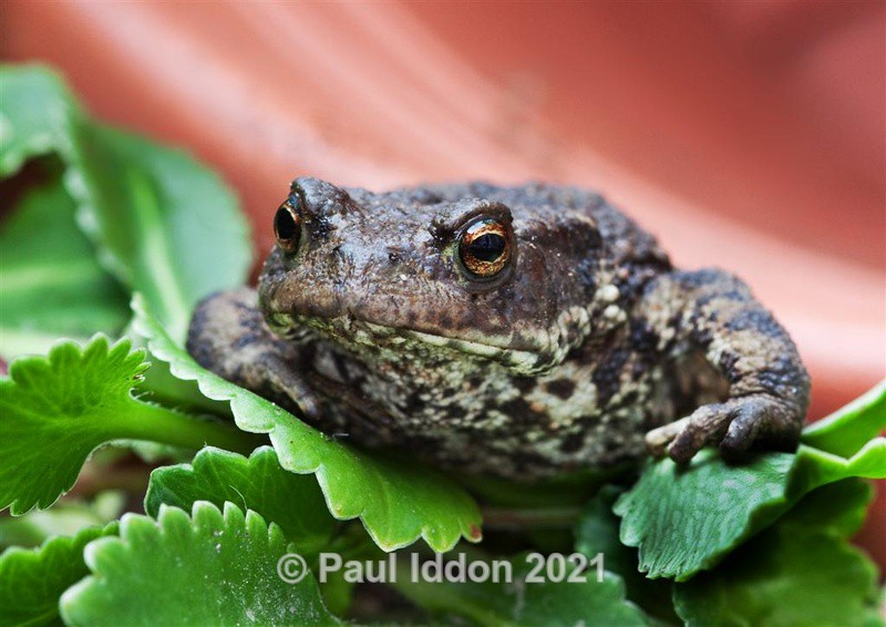 Toad in the Hole - Nature - Birds and Wildlife