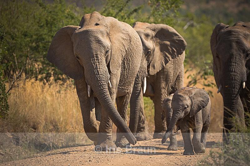 Family Trip - Elephant