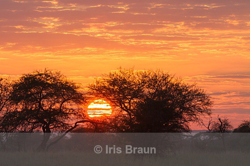 Sunset - Landscape