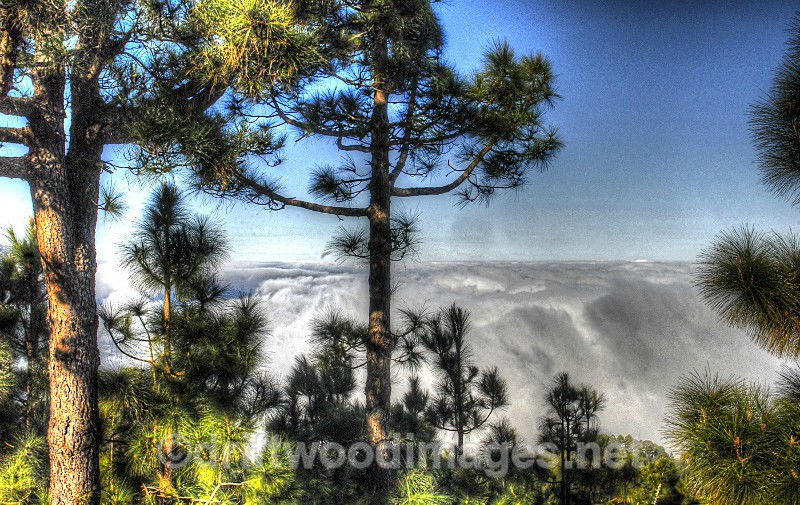 Tenerife view trees and cloud top HDR reduced - High Dynamic Range pictures