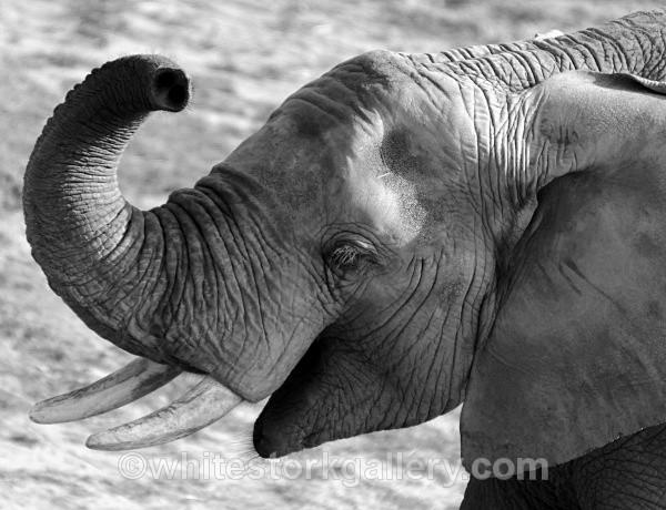 The Happy Elephant ! - Wildlife and Animals