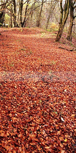Leafy Carpet Nature Reserve. - Land and Sea