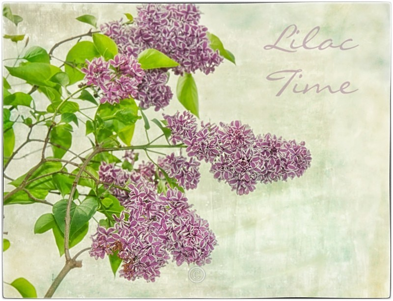 Lilac Time - FLOWERS