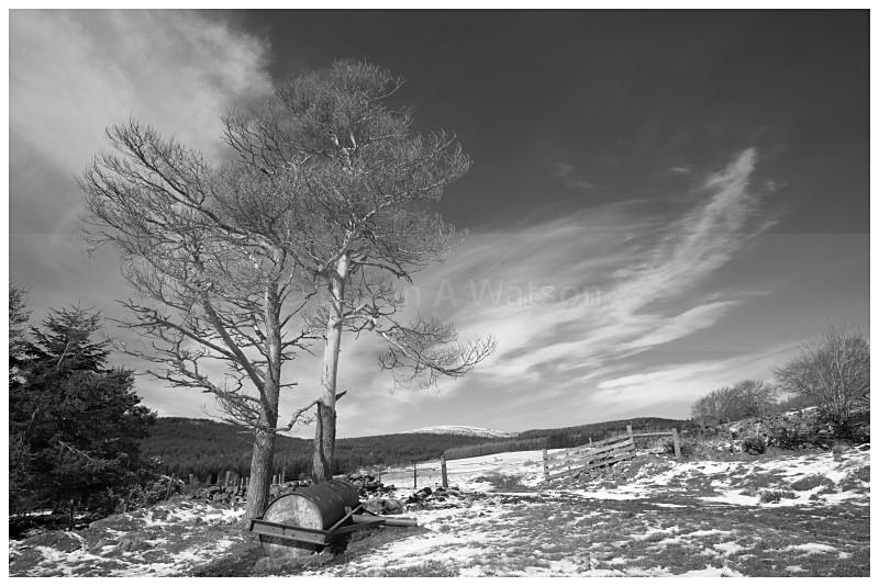 Blackhills - Landscapes