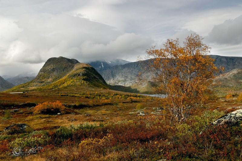 Knutshø 20050921-IMG_7724_300 - Norske landskap