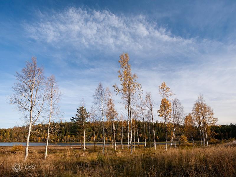 Lygna 20151003-IMG_8159_5 - Norske landskap