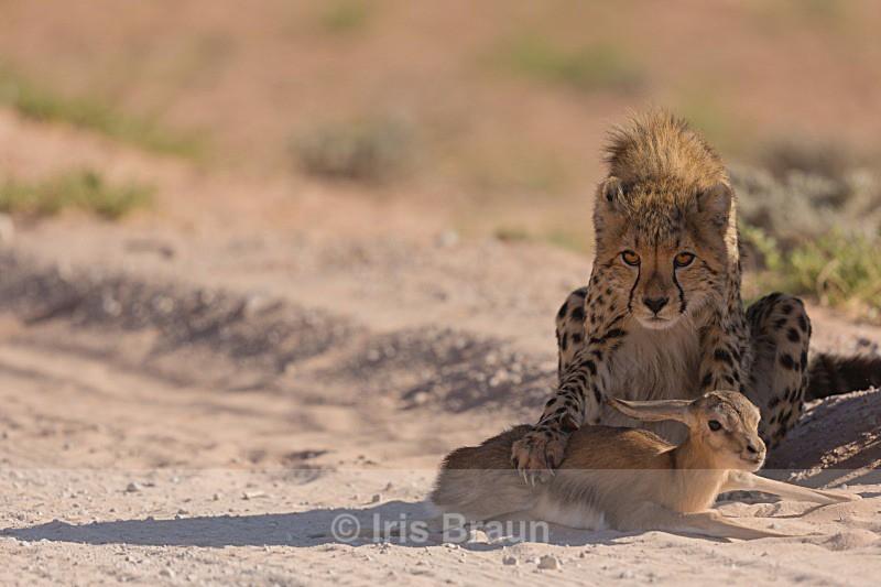 First Kill - Cheetah