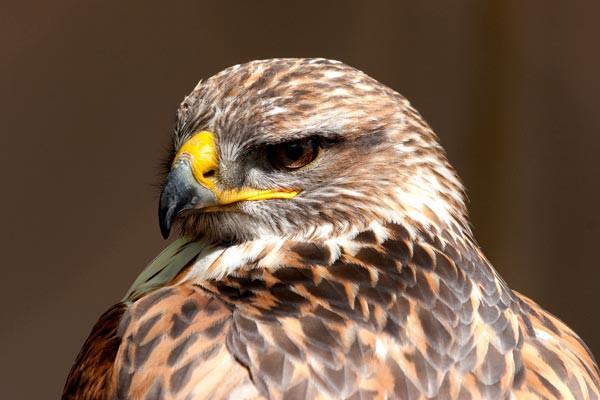 Eagle Head - Wildlife