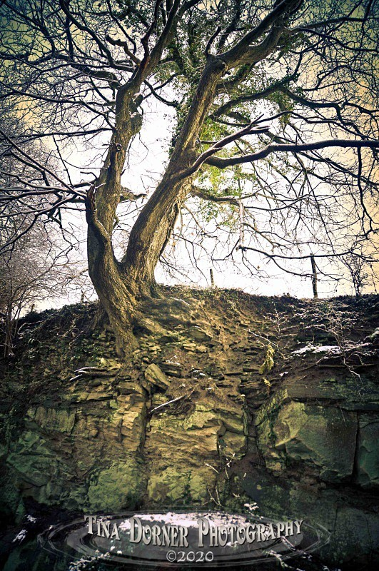 Tree in Rock by Tina Dorner Photography, Forest of Dean and Wye Valley, Gloucestershire