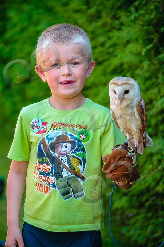 Barn Owl Loki with Luke - Our Birds