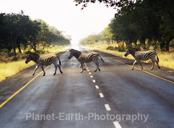 Zebra Crossing - Around The World