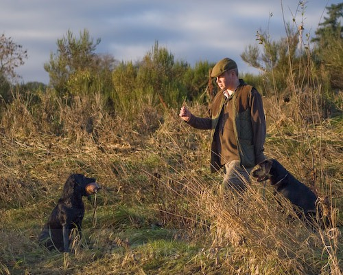 4 - Heney Gundogs