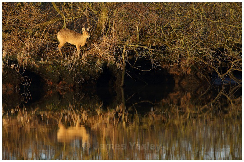 Water Margins - A Tale of the Marshes - River Scrape & Lake