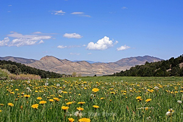 Washington Creek Meadow - Nevada (mostly) Landscapes