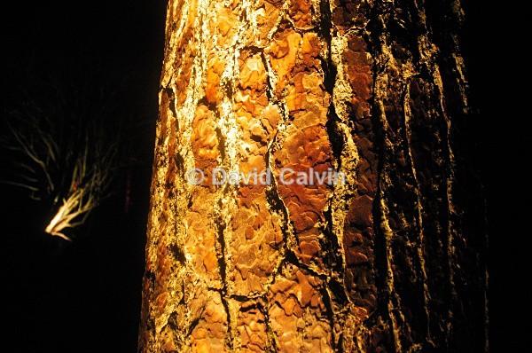 Illuminated Trunk - Nocturnal