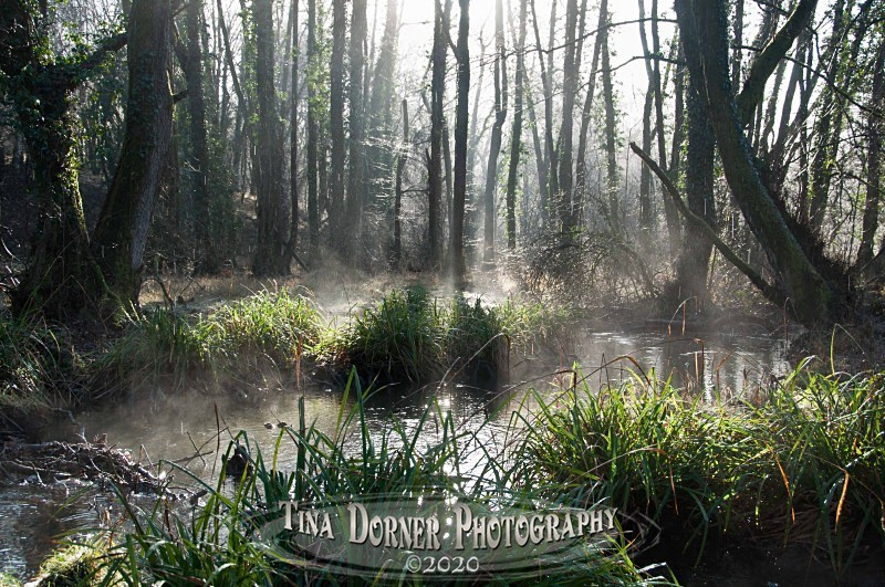 A Woodland Swamp at Cannop Ponds. Winter Landscape portfolio by Tina Dorner Photography,  Forest of Dean and Wye Valley, Gloucestershire