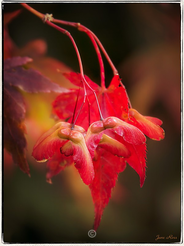 The Colour of Autumn - FLOWERS