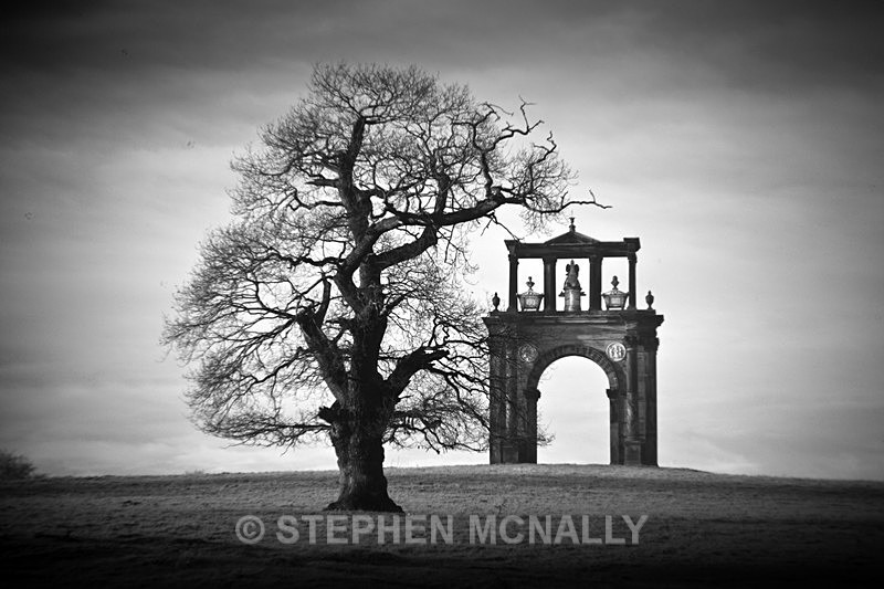 Triumph of a tree - Landscapes