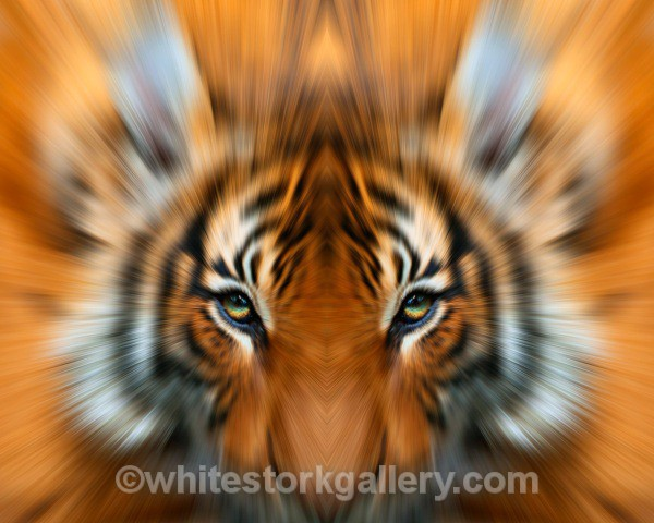 TIGER - Wildlife and Animals: Art