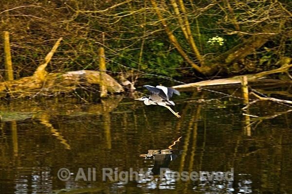Wildlife1089 - Wildlife Wales