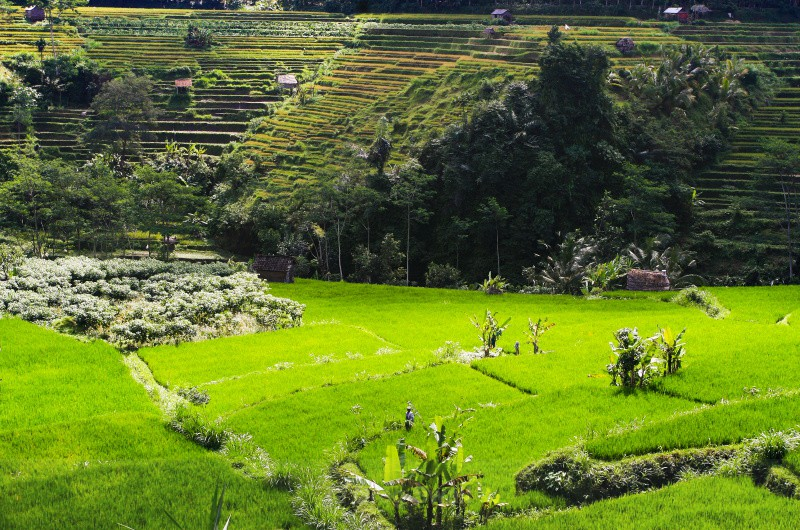 Lush Heartland - Bali's Lush Heartland