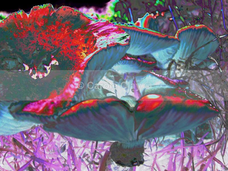 Fungi SS013 - Skelton Show