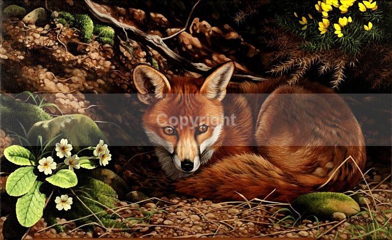 Until nightfall - Foxes