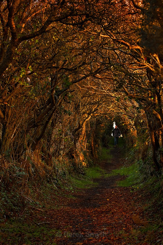 Tree Tunnel at Ballynoe - Ancient Path to the Stone Circle Monument