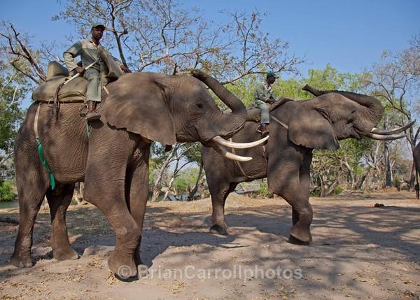 Elephant Encounter Zambia - African Safari Tour 09 Zambia, Botswana,Namibia & South Africa