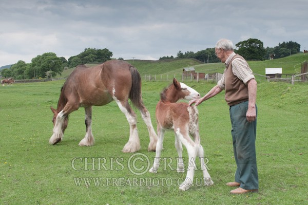 ryecroft-13 - Clydesdales 2013 Include Foals