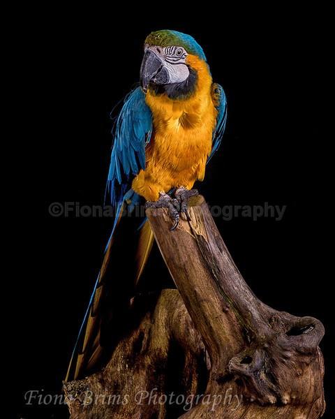 wow studio-24 - Birds of Prey