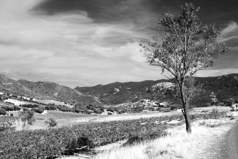Duilhac-sous-Peyrepertuse - European Landscapes
