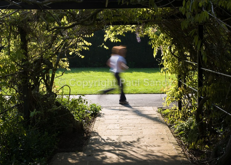 Running, Pinces Gardens, Exeter - Seeing the Wood AND the Trees