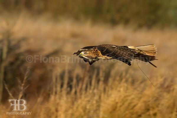 wow-19 - Birds of Prey