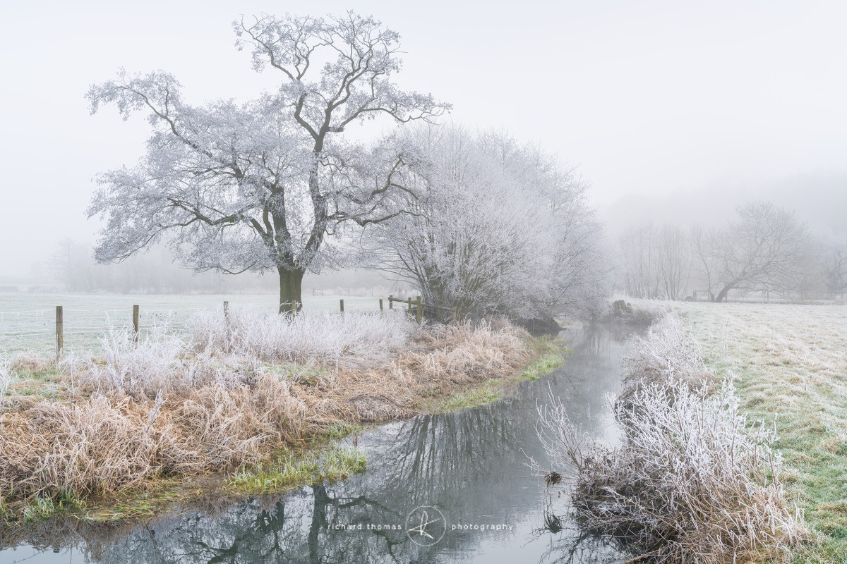 The River Wey on a cold winter morning in January with trees covered in hoar frost