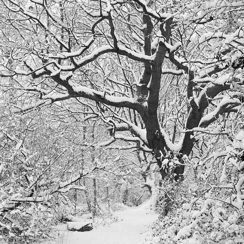 Winter Woodland_IMG_3704_BW - Black & White