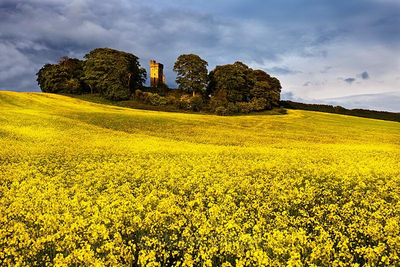 In Full Bloom - Castletown Tower
