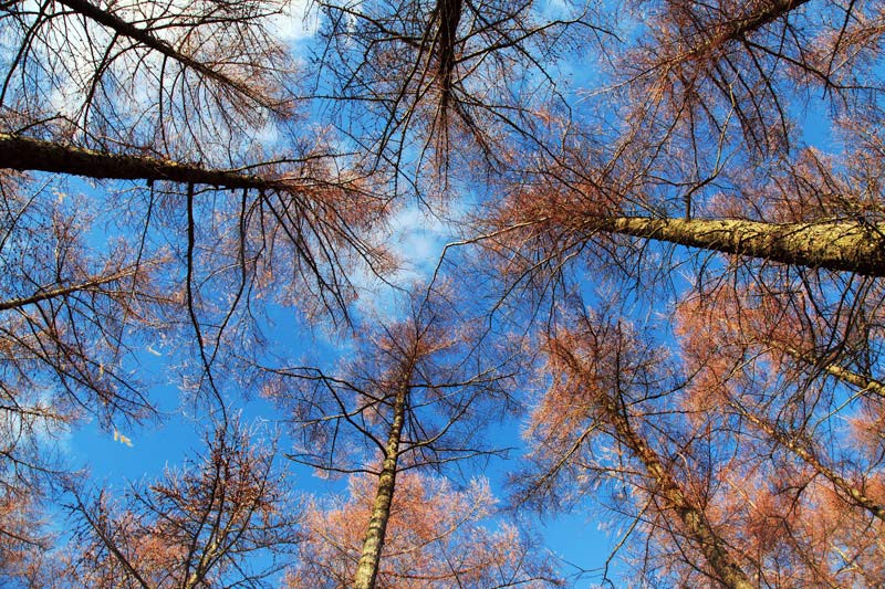 Looking Up - Tollymore Forest Park