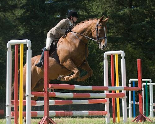 116 - Moniaive Horse Show 2008