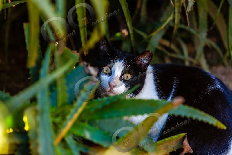 Cat domestic-19 - Pet Photography