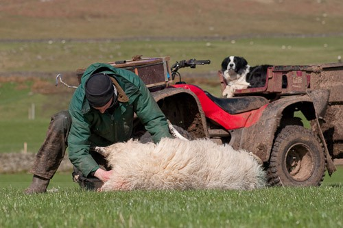3 - The Lambing