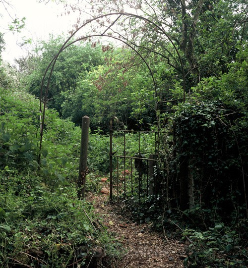 Gate in undergrowth - Farmhouses and Cottages