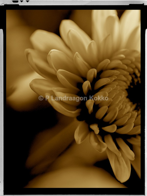 Cherished Flower 2 - Natural World